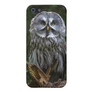 Pájaros de la caja del teléfono de la fotografía iPhone 5 fundas