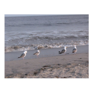 pájaros de la playa postal
