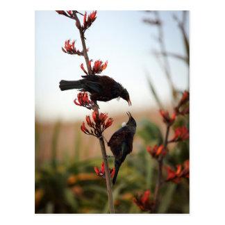 Pájaros de Tui en arbusto del lino de Nueva Postal