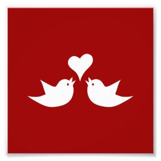 Pájaros del amor con el corazón que casan fotografia