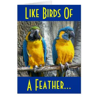 Pájaros del amor tarjeta de felicitación