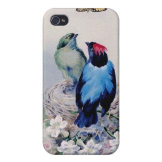 Pájaros en caso de la jerarquía iPhone 4 coberturas