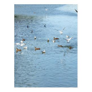 Pájaros en el río del verano postal