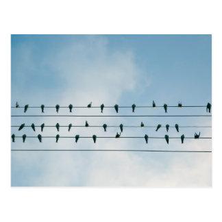 Pájaros sobre hijos postal
