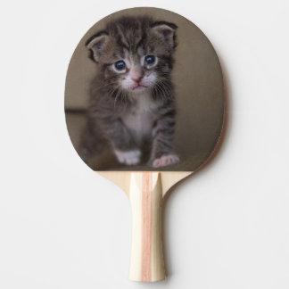 Pala De Ping Pong ` del gatito