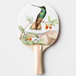 Pala De Ping Pong El animal de la fauna del pájaro del colibrí