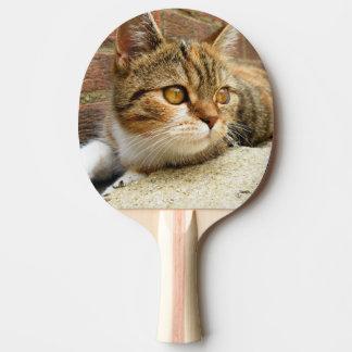 Pala De Ping Pong Paleta del gato