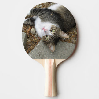Paleta al revés del ping-pong del Tabby Pala De Ping Pong
