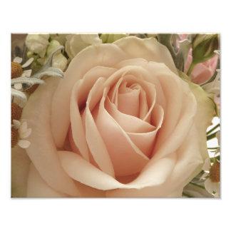 Palidezca - color de rosa rosado foto