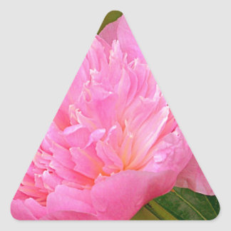 Palidezca - el Peony rosado Pegatina Triangular