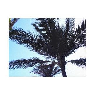 Palm tree lienzo