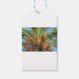 Palma datilera etiquetas para regalos