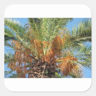 Palma datilera pegatina cuadrada