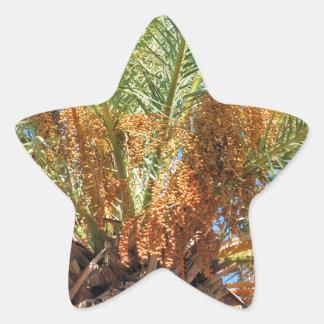 Palma datilera pegatina en forma de estrella