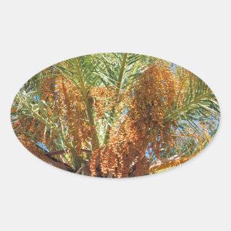 Palma datilera pegatina ovalada