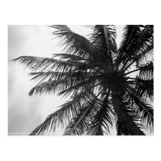 Palma de coco postal