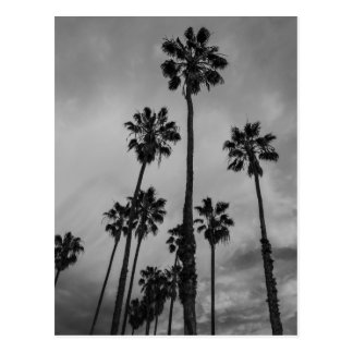 Palmas de B&W Los Ángeles Postal
