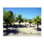 palmas de la playa del tela tarjeta postal