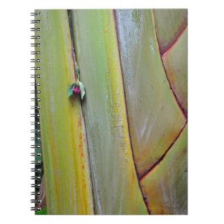 Palmera de los viajeros cuaderno