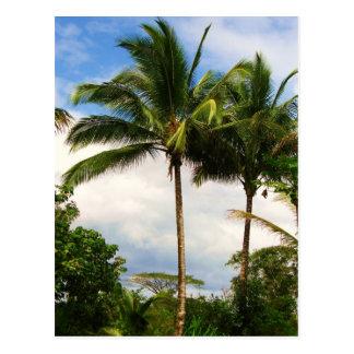 Palmera hawaiana postal