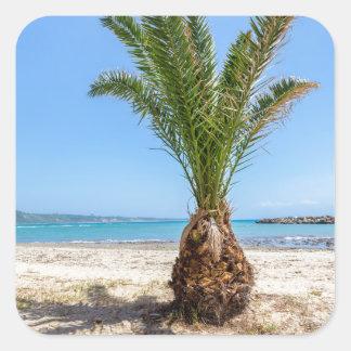 Palmera tropical en la playa arenosa pegatina cuadrada