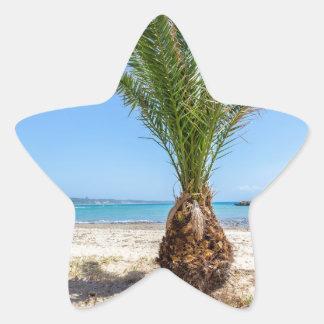 Palmera tropical en la playa arenosa pegatina en forma de estrella
