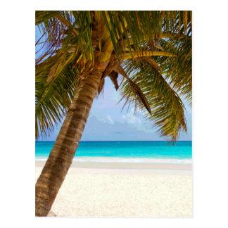 Palmeras en el mar y el cielo azules de la playa postal