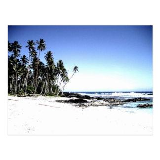 Palmeras y playa exóticas del paraíso postal