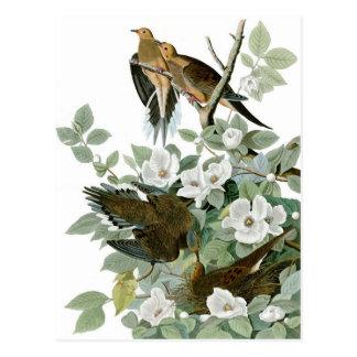 Paloma de luto, multa de John James Audubon Postal