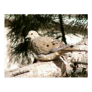 paloma en árbol tarjetas postales