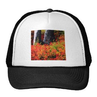 Panadero del soporte del otoño gorras