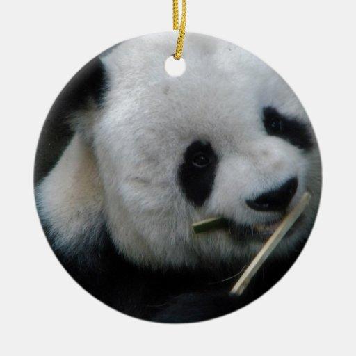 Panda Ornato