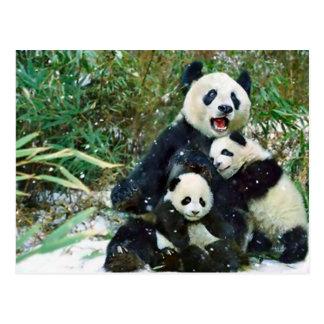 Panda de la madre postal