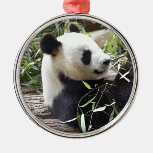 Panda gigante que come el bambú ornamento de reyes magos
