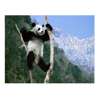 Panda pegada en árbol postal