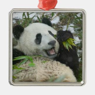 Panda que come el bambú en la nieve Wolong Sichu Adorno De Navidad