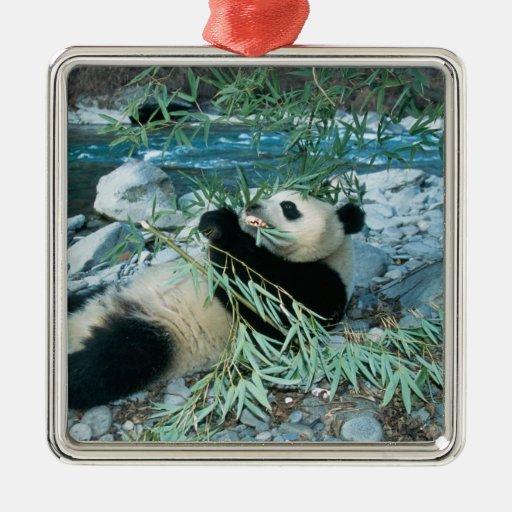 Panda que come el bambú por la orilla del río, Wol Ornamento Para Arbol De Navidad