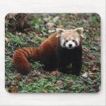 Panda roja alfombrilla de ratón