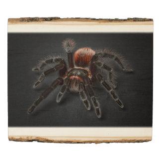 Panel De Madera Araña melenuda del tarantula