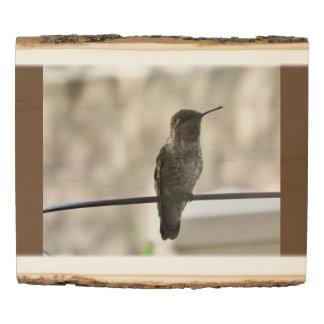 Panel De Madera El colibrí