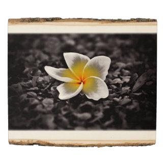 Panel De Madera Flor de Hawaii del Frangipani del Plumeria