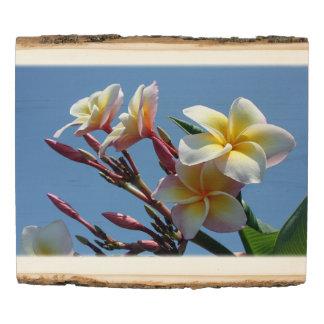 Panel De Madera Floraciones llamativas del Frangipani del Plumeria