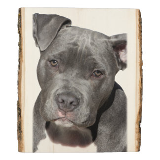 Panel De Madera Pitbull Terrier americano
