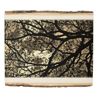 Panel De Madera Ramas de árbol de la sepia
