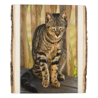 Panel De Madera Retrato del gato de la concha, fotografía del