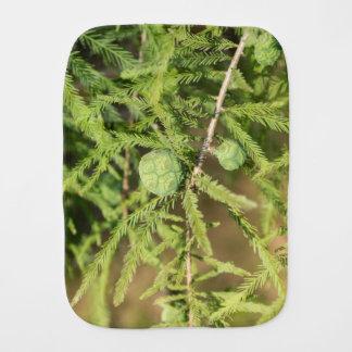 Paño Para Bebés Cono de la semilla de Cypress calvo