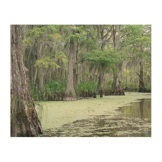 Pantano de Luisiana Impresión En Madera