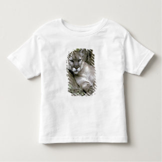 Pantera de la Florida, coryi del concolor del Camiseta De Bebé