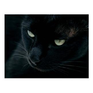 Pantera negra - postal