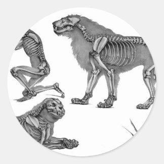 Panthera Leo - leones esqueléticos en descanso Pegatinas